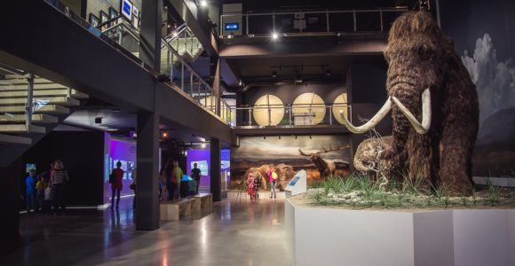 Mammoth at the Ice Age Centre
